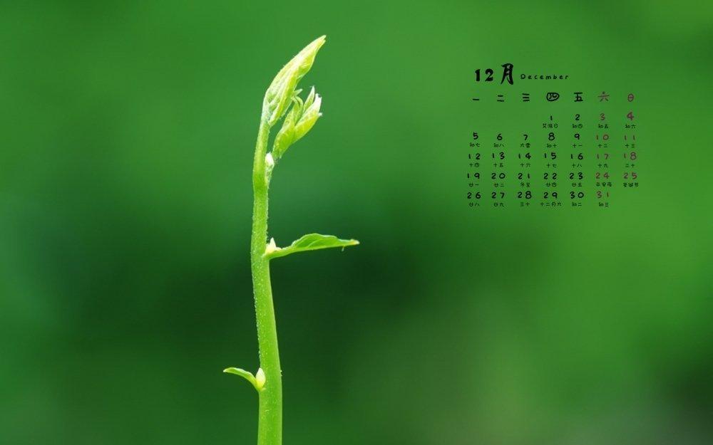 2016年12月日历绿色护眼小清新植物高清壁纸 电脑壁纸-第1张
