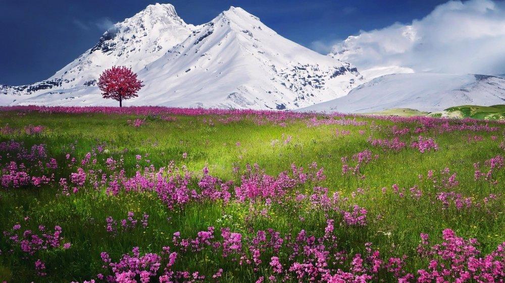 雪山之下的薰衣草唯美风景桌面壁纸 唯美壁纸-第1张