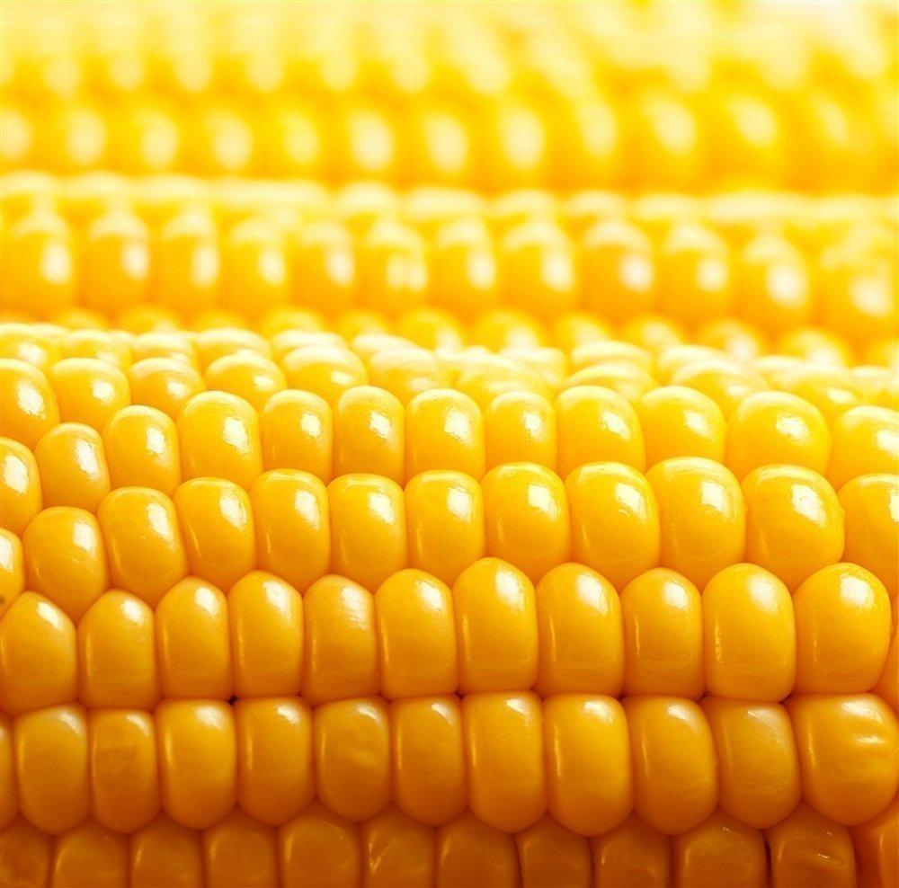 新鲜的玉米粮食特写高清素材图 美食图片-第1张